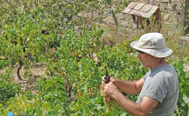 Karimalis_winery