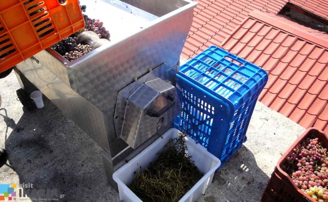 The_first_processing_of_the_grapes_Ikaria