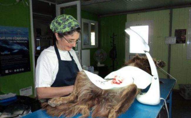 sterilization-program-ikaria